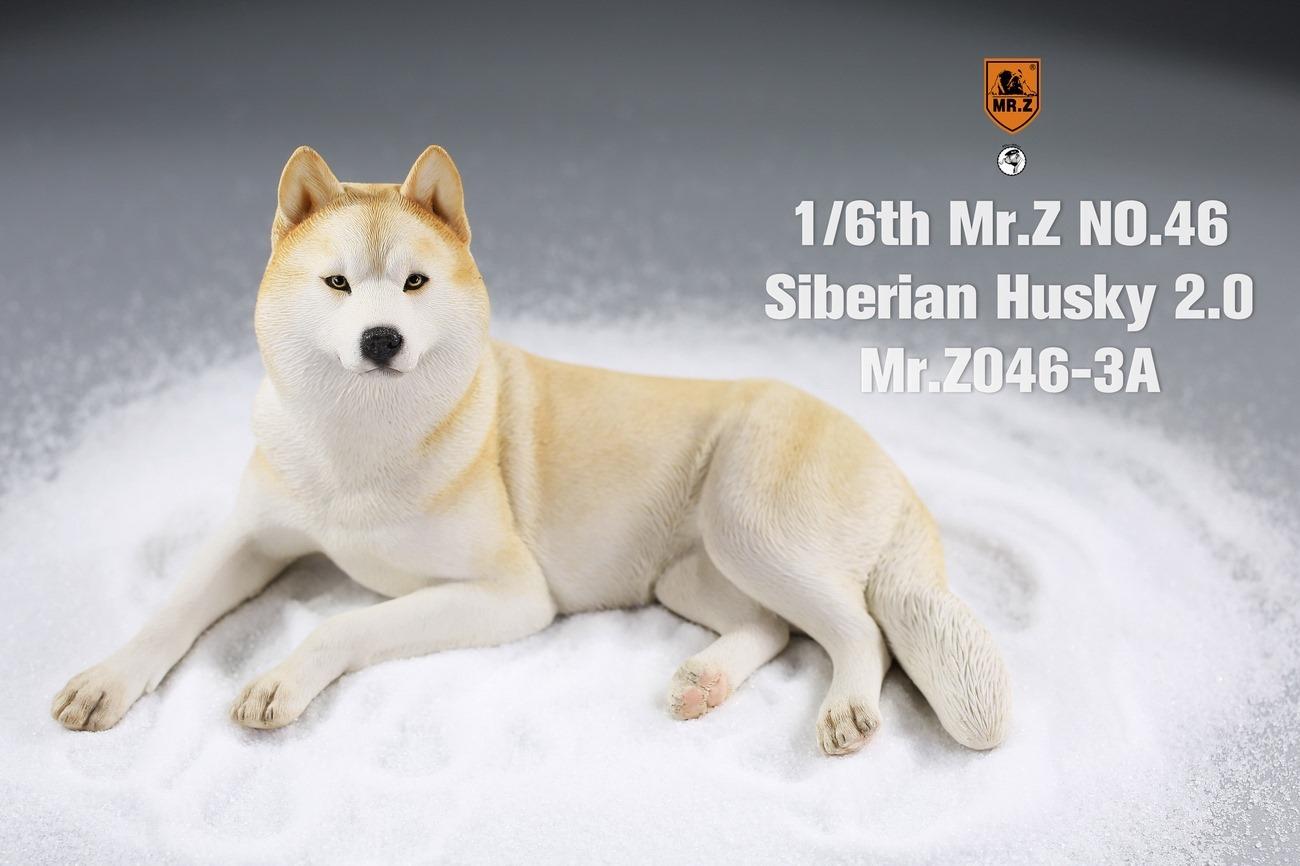 mrz-husky05
