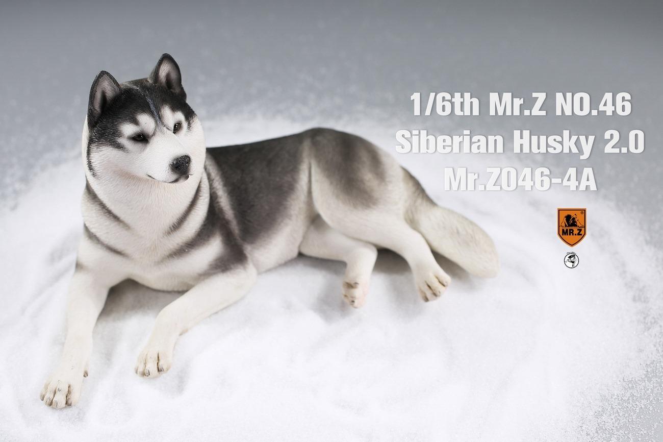 mrz-husky07