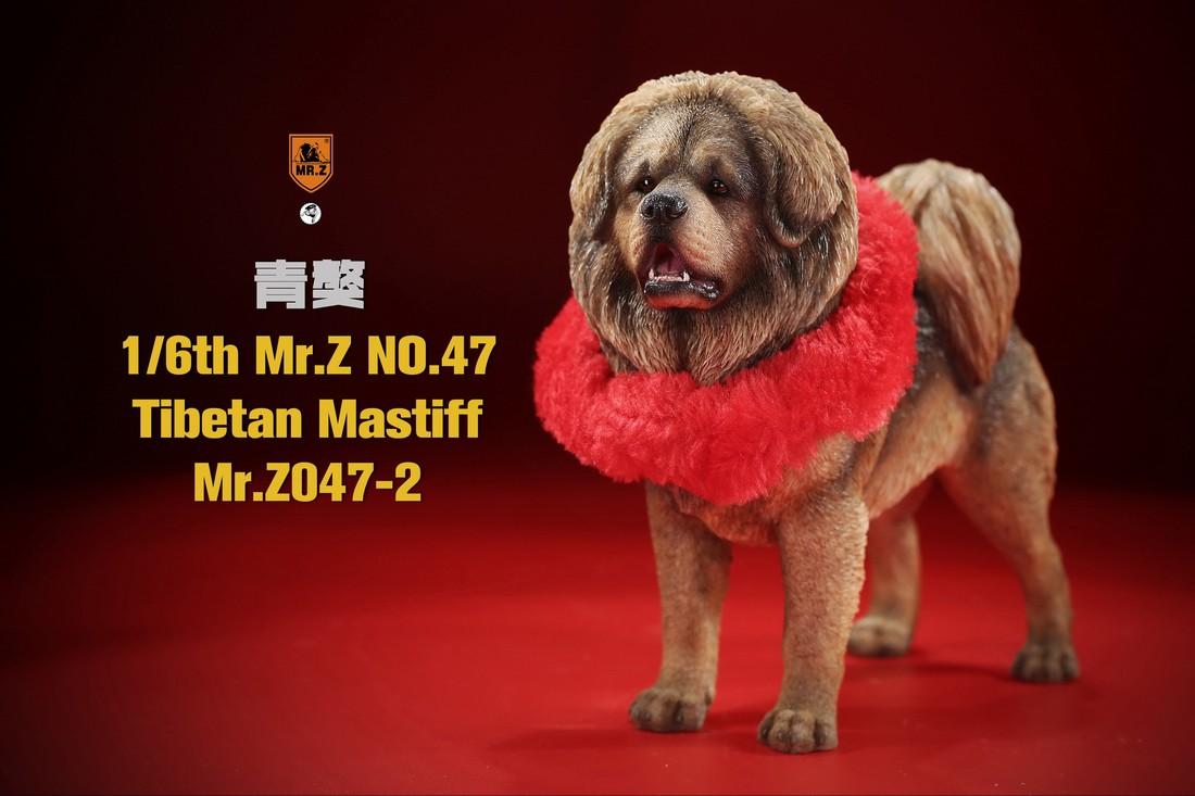 mrZ-tibetan.mastiff03