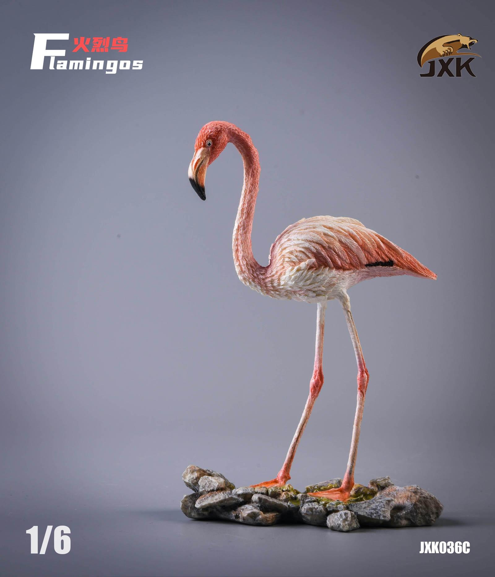 jxk-flamingo03