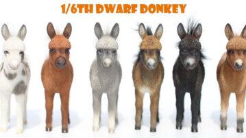 mrZ-dwarfdonkey00