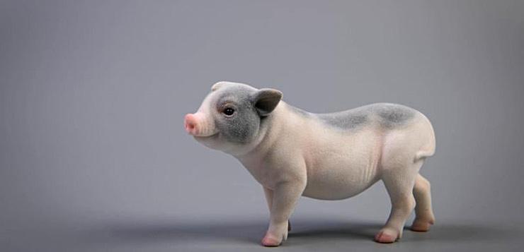 jxk-pigs00