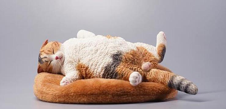 jxk-sleeping-cat00