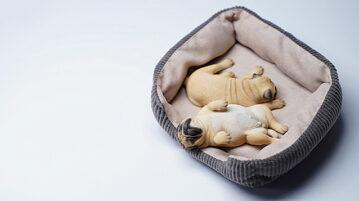 jxk-Pugs-Sleep00